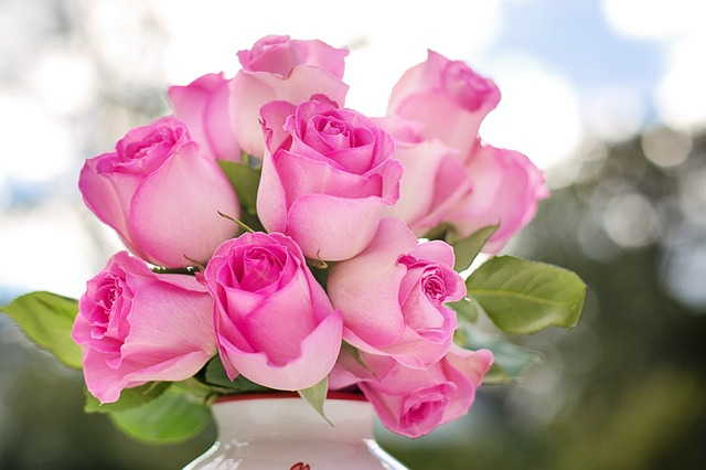 pink-roses-2191636_640